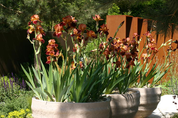 Plant Focus   Andy Sturgeonu0027s Bearded Irises