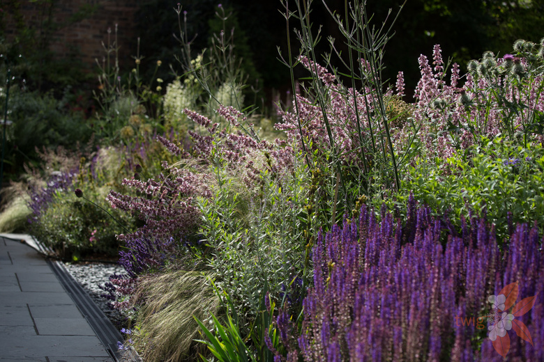 new perennial garden - Scottish garden design portfolio ...