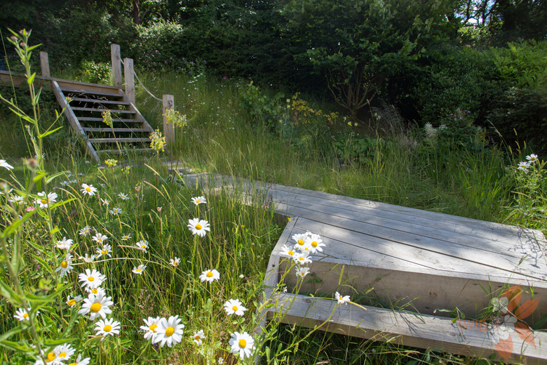 Scottish wild garden - Scottish garden design portfolio ...