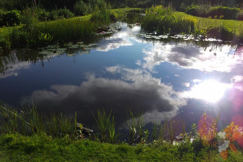 Edinburgh wildlife pond scottish garden design portfolio for Design wildlife pond